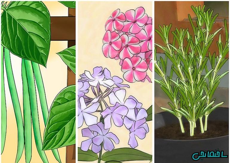 آموزش طراحی باغچه و باغبانی