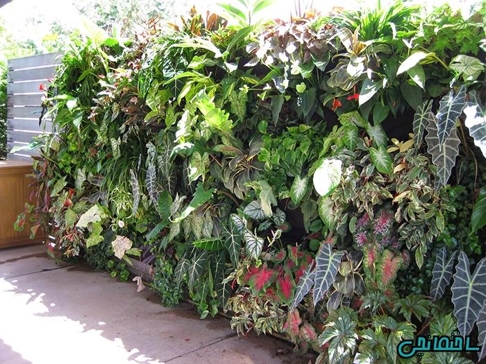 9 روش استفاده از گیاهان آپارتمانی