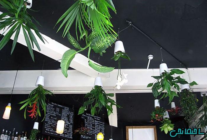 استفاده از گلدان های آویز سقفی