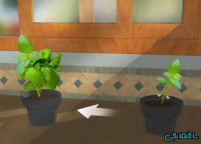 آموزش نگهداری از گل و گیاه در منزل