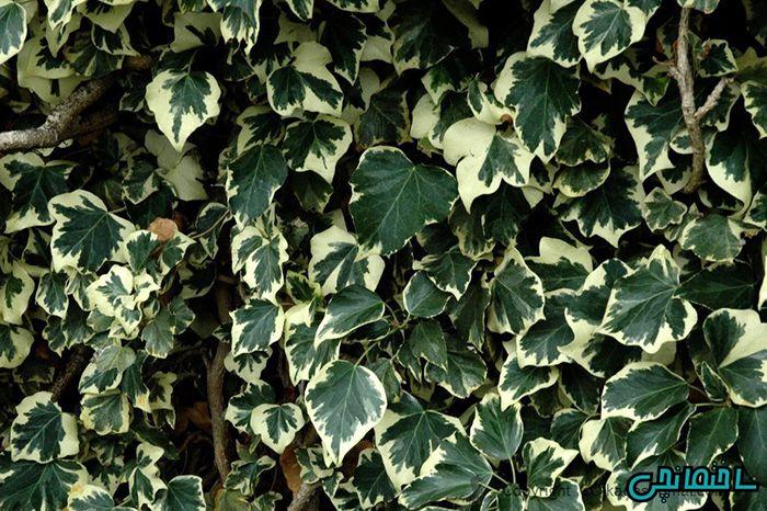 %عکس - باغچه ای همیشه سبز با گل های چهار فصل
